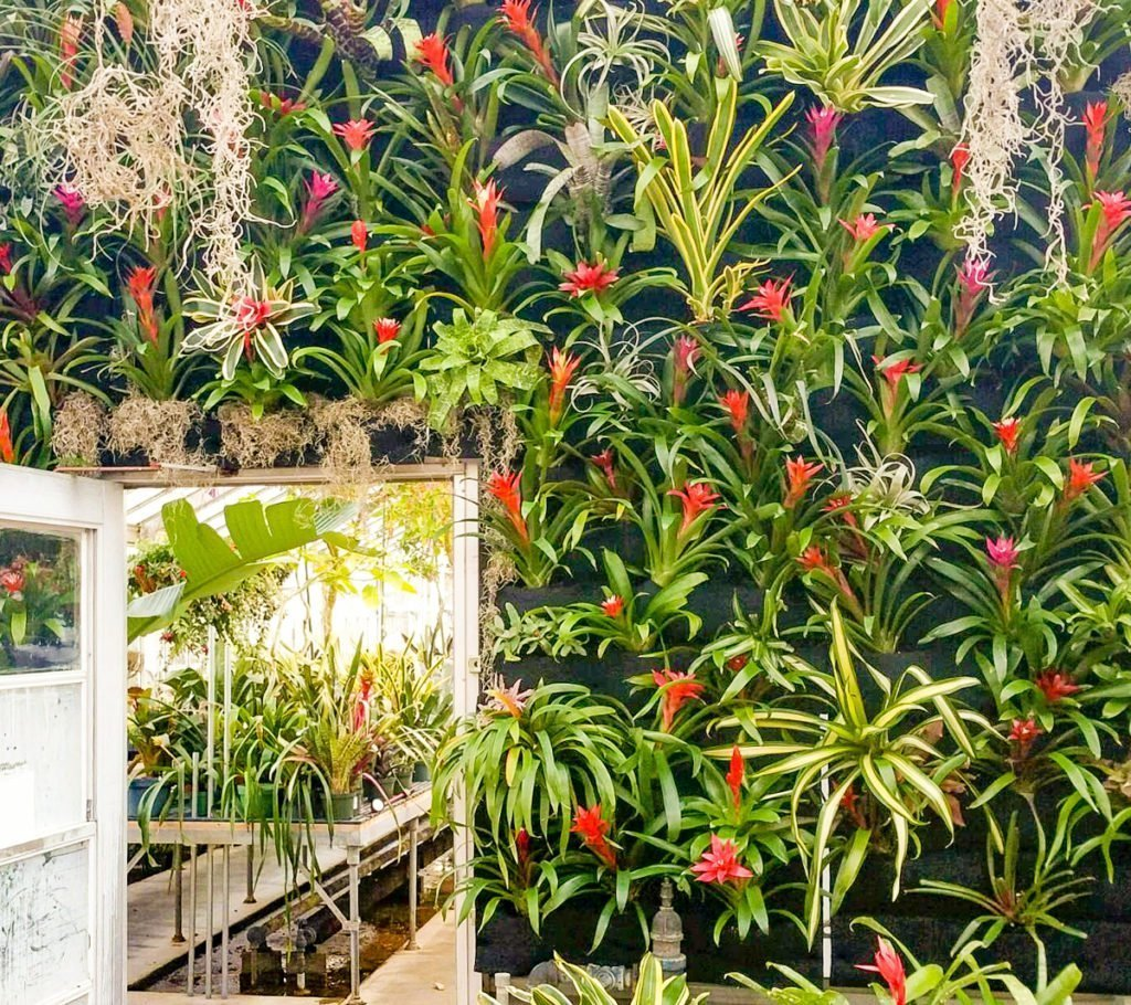 Florafelt living wall system featuring bromeliads at Kingwood Center Gardens, Mansfield, Ohio.