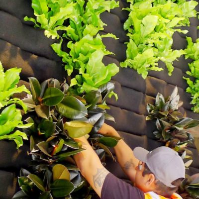 Florafelt Pockets Living Wall System install for CBRE San Francisco