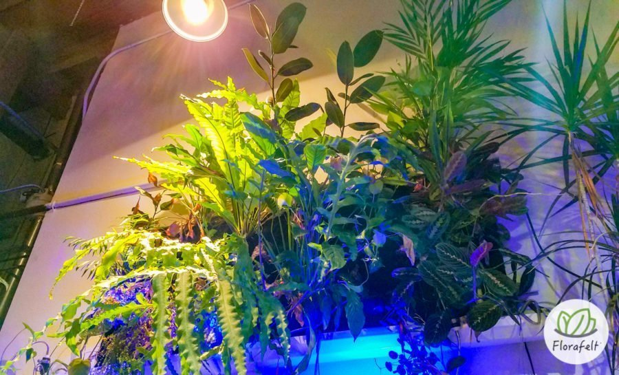 Florafelt Vertical Garden by Adam Clark at his live/work event space Outpost India Basin in San Francisco.