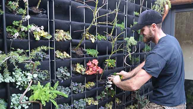 Andrew Jason Adams planting a Florafelt Recirc Unit at Living Green Design in San Francisco.