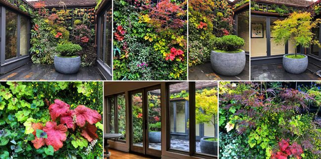 Florafelt Pro System Installation by Living Green Design