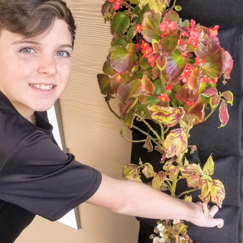 Plant walls are a great way for kids to learn about the future of gardening.